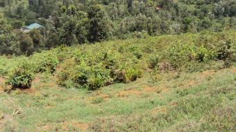 PRIME AGRICULTURAL LAND FOR SALE Meru County