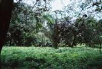 Commercial or residential lot Nosara
