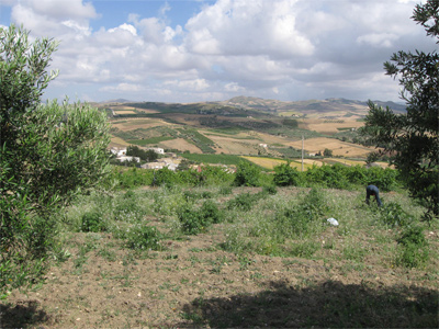 Land in Sicily  FOR SALE (Italy) 91100