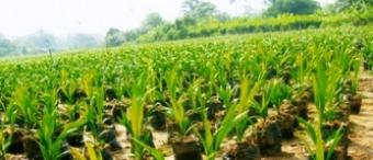 NEW PALM OIL LANDS FOR SALE Kumba