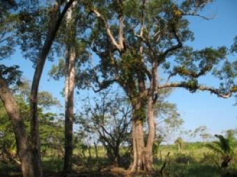 Farmland - 20.54 Acres Utila