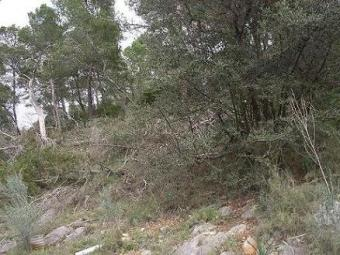 Plot(s) of land in Andratx, Palma De Mallorca