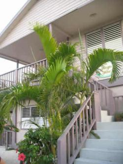 Family Compund/2 homes in ONE! San Pedro