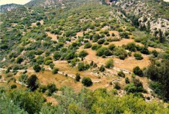 Land for Sale in Cyprus Paphos