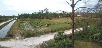 5 Acres land! REDUCED TO SELL Florida