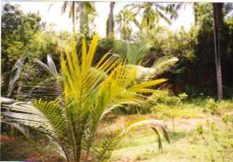 Plot for Sale in Vattiyoorkavu, Thiruvananthapuram