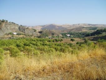 Country land in South Spain Malaga