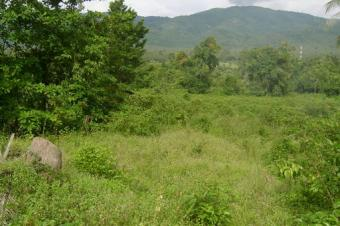 10 Plots of Land in Great Ningo Accra
