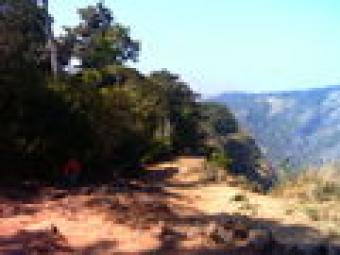 Estate of 200 acres for sale Palakkad