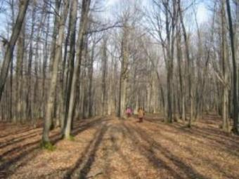 For Sale, 663ha forest, Timis Timisoara