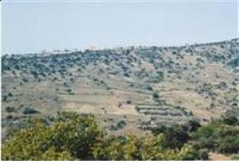 Land for sale in Cyprus Paphos Paphos