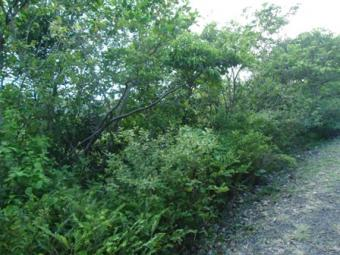 Land for sale in Cap Estate Gros Islet