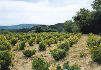 Land for sale in Paphos Paphos