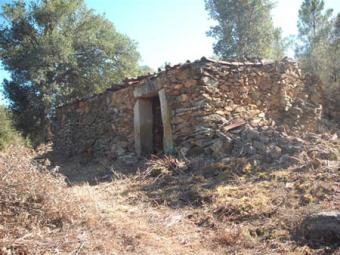Portugal 6.5ha of forested land Pinhel