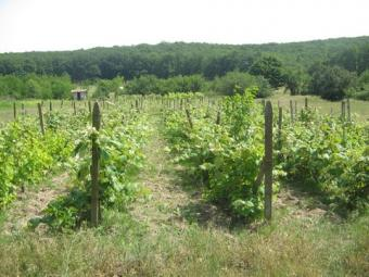 Vineyards for sale Novi Pazar