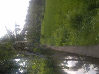 Ubud Land For Sale Denpasar