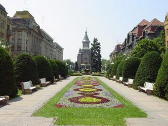 Activity sale in Timisoara Timisoara