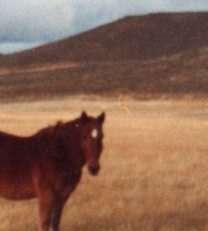 I sell a field in Bariloche Bariloche Patagonia