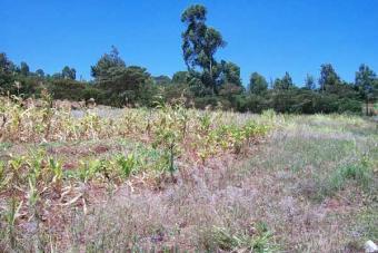 Kerarapon Plot Nairobi