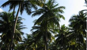 22.5 perches land for sale Gampaha