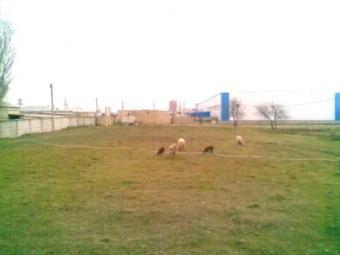 Realty Estate Property Land area Baku