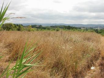 Plot of land in Silver Coast Alcobaça