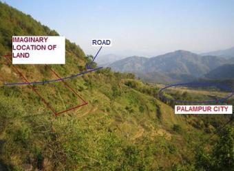 Palampur (HP) – Land for sale Palampur