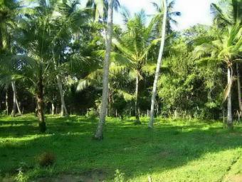 land sale , 45 PERCHES Kuliyapitiya