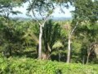 # 2100 - 10 ACRES PRIME PROPERTY Belmopan