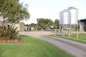 One of the best dairy farms Woodside