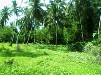 Coconut land LAND FOR SALE Kurunegala, Narmmala