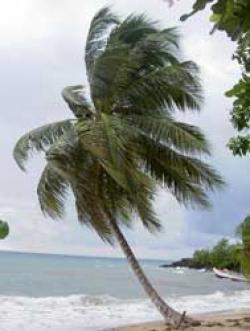 Punta Cana beach front property Punta Cana