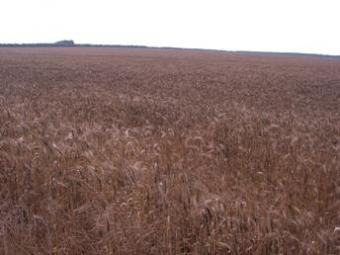AGRICULTURE LAND FOR SALE Kavarna