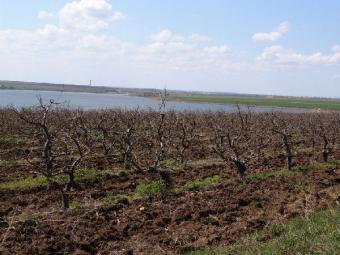 LAND FOAR SALE Constanta