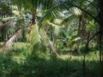 A LAND FOR SALE IN GALL HAPUGALA Galle