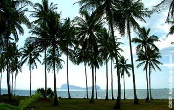 Urgent sale resort on island Trang