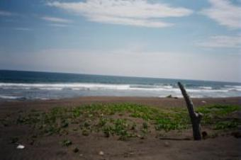 Beach Front Property located on Manzanillo