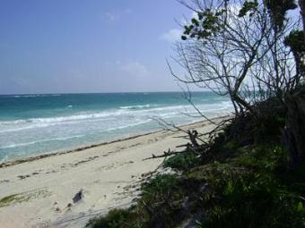 MLS-26386 Great oportunity Tulum
