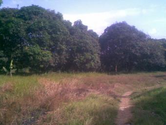 Mango Farm with 2,700 Mango tree Antipolo City