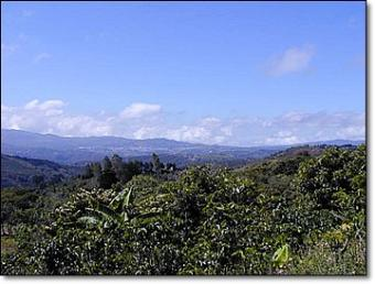 Highland Coffee Farm for Sale San Ramon