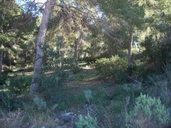 plot of land in santa ponsa Palma De Mallorca