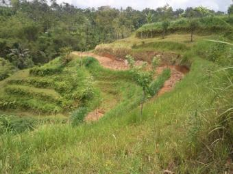 Pupuan land Ubud