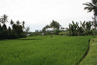 Land for sale in Ubud - Bali Ubud