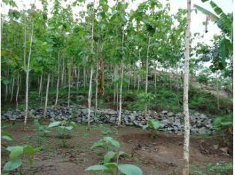 sale high land for villa or rest Geroeng, West Lombok