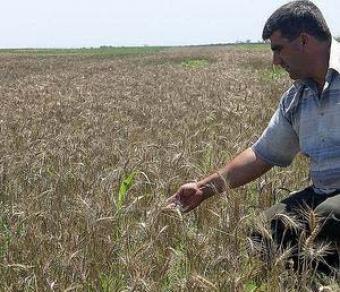 Agriculture land Orhei