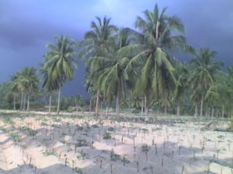 land for sale near beach Ban Phala