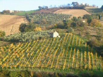 k73 stone and brick farmhouse Montefiore Conca