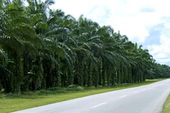 old palm oil land for sale South West,litoral Province