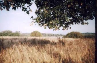 An atractive plots of land Nidzica