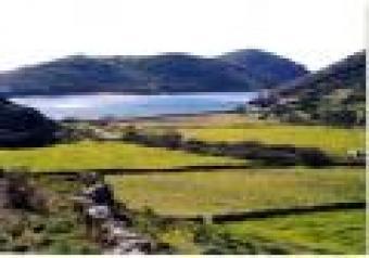 we sellAgriculturl land in india Dachepalli
